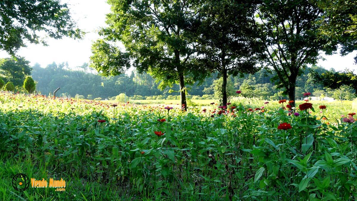 Que ver en mito jardines de kairaku en jap n - Jardines de japon ...